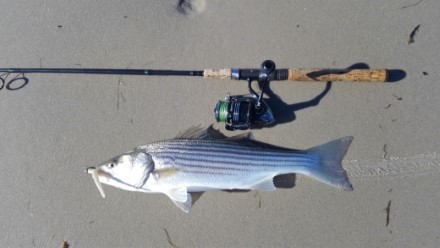 Cape Cod Fishing Expeditions-Cape Cod Fishing Report